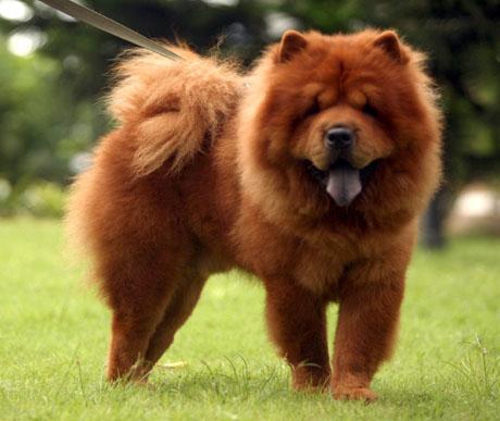 Mitől fénytelen és töredezett a kutyáknak a szőre?