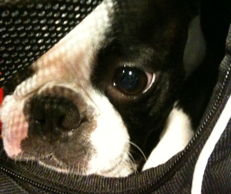Kutyával a repülőn