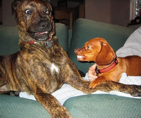 A sokadik kutya