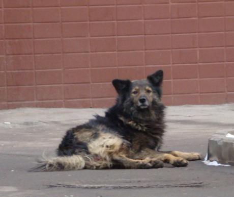 Elharapódzott kutyaharapások