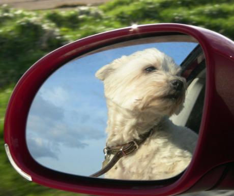 Hiszti az autóban
