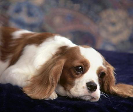 8 tuti tipp kutyavásárlásra