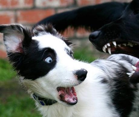 Miért veszélyesek az állatkínzók a társadalomra?