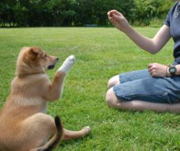 """Képtalálat a következőre: """"kutya nevelés"""""""