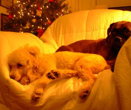 Kutyapanziók télen is