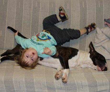 A kutyák szocializációja