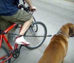 Kerékpározás kutyával