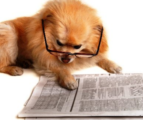 Kutyák cukorbetegsége