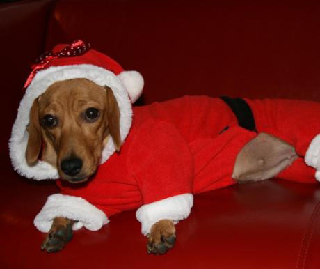 A kutya egy életre szól, nem csak karácsonyra