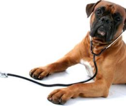 A kutyák ásványianyag- és nyomelem-szükségletéről