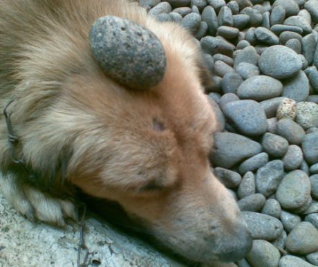 Buddha kutyái I.