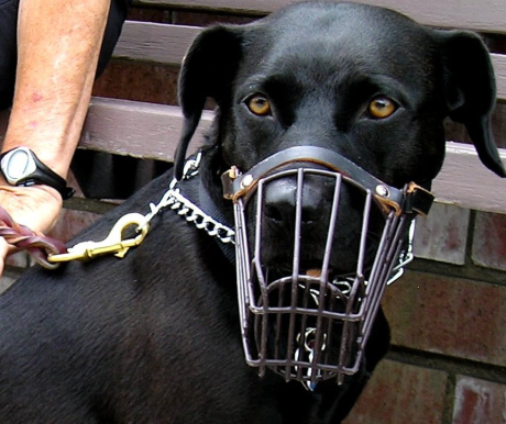 Vigyázz, harapós kutya!