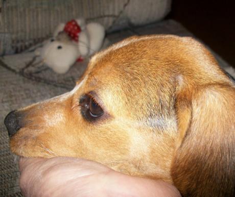 A keverék is kutya