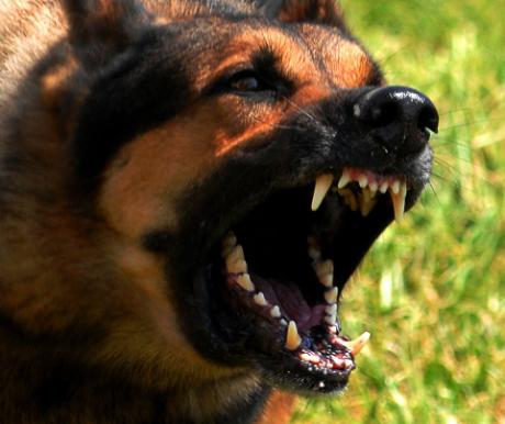Az én kutyám megtámadja a vendégeket