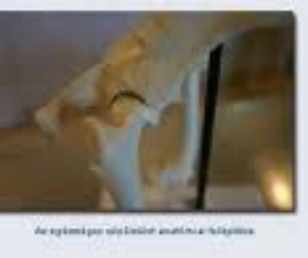 Computer tomograph alkalmazása a kutyák csípőízületi diszpláziájának szűrésére