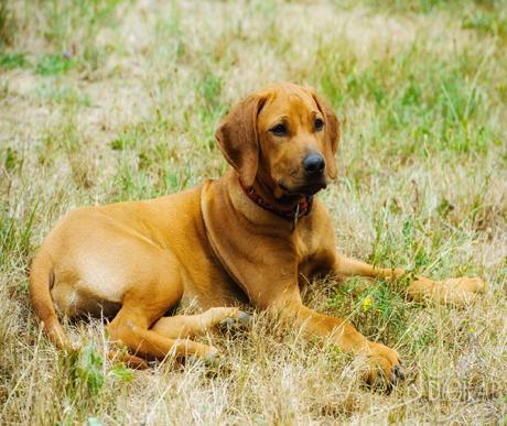 Afrika kutyafajtái