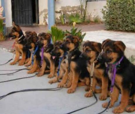 Miről lehet felismerni a jó kutyaiskolát?
