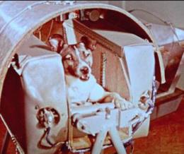 Kutyák az űrben