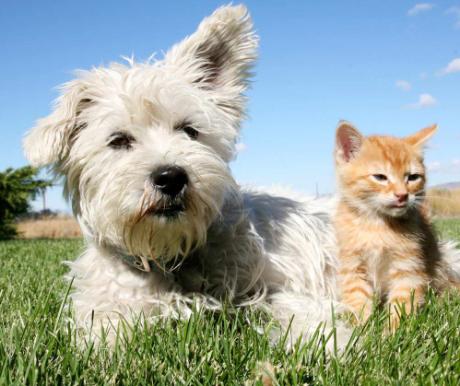 Állati biztosítás