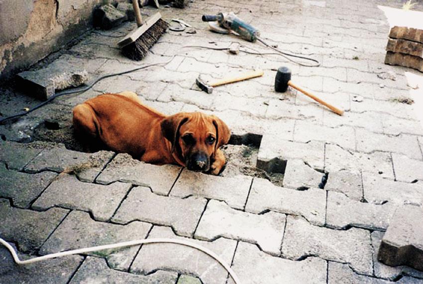 A kutya fejlődésének, nevelésének, tanításának feltételei