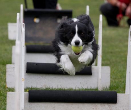 Flyball – Az igazi közösségi sport