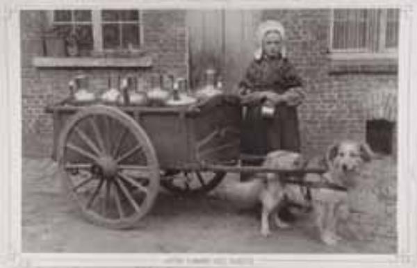 Amit nagymamáink a kutyákról tudtak