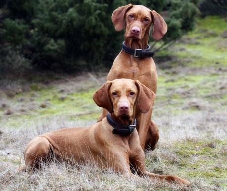 A kutyák is vadásznak