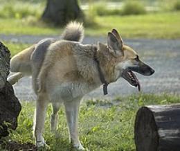 Megjelent a Kutya Szövetség