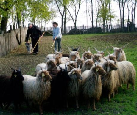Védelmező pásztorok