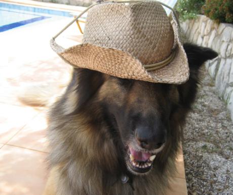 Kutyával nyaralni? Csúcs!