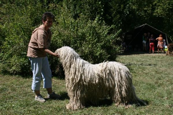 A nagykutya a kutya