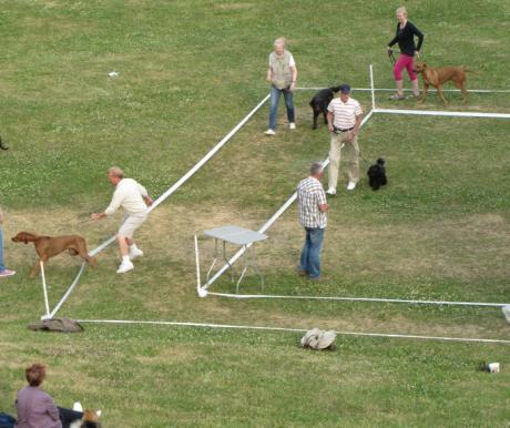 A kutyanevelési alapfogalmak újraértékelése