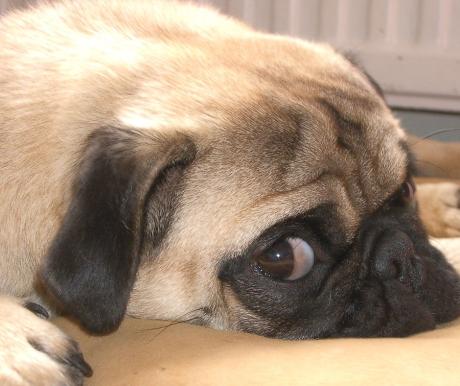 Kutyák ivartalanításáról