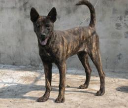 A tajvani kutya