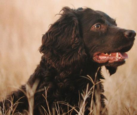 Dél-Karolina kutyája