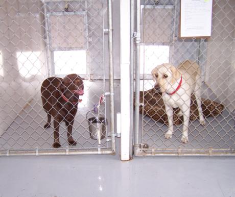 Kutyák - rács mögött