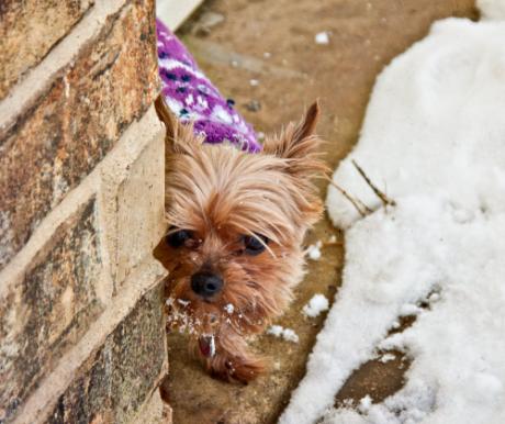 Kutyák télen