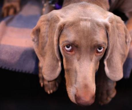 Egy talált kutya megértése