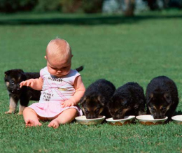 A gyerek és a kutya