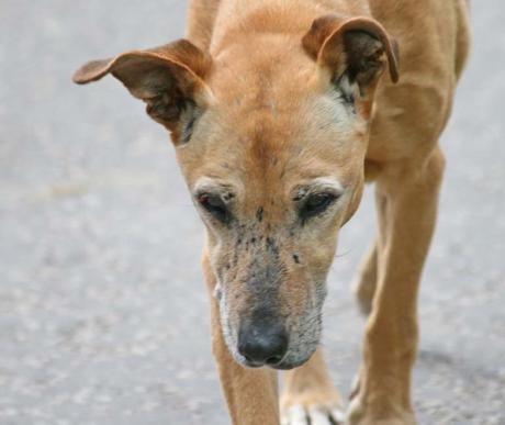 Idős kutyák, időskori betegségek