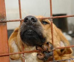 Menhelyi kutyk becslete