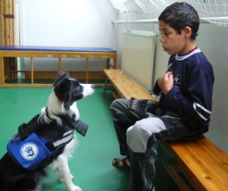 Kutya az iskolában