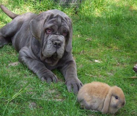 A kutyák féregtelenítéséről