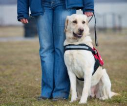 A vakvezető kutya kiképzése