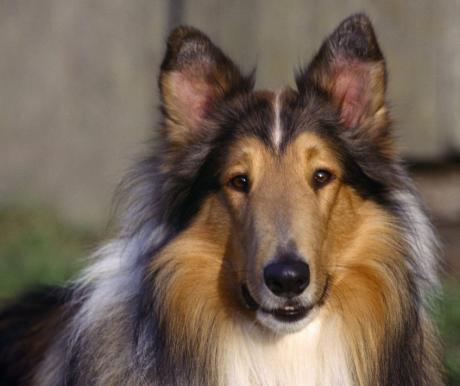 A legnépszerűbb kutyanevek