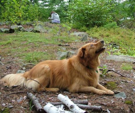 Vadkempingezés a kutyával