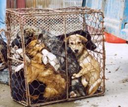 Állattartási szabályok: csak papíron?