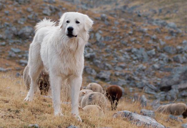 Fehér kutyák 3. rész
