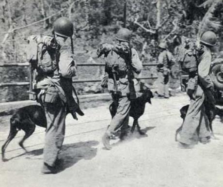Kutyák alkalmazása az osztrák-magyar hadseregben