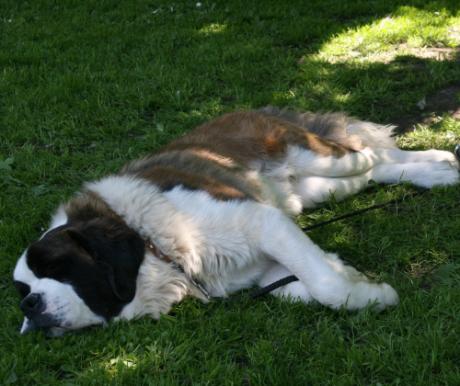Hogyan óvjuk kutyánkat a hőségtől?